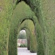 Alhambra Granada decorative   garden with bush arches outdoor — Stock Photo #55958535