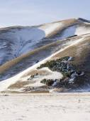 View of forest trees in snowy plateau of Castelluccio di Norcia — Stock Photo