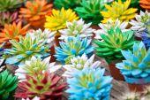 Lot of coloful Echeveria rosettes — Stock Photo