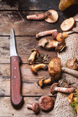 Mix of forest mushrooms — Foto Stock