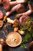 Mix of forest mushrooms — Stock Photo