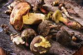 Boletus Mushrooms — Stock Photo