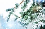 Frozen branches in ice — Stock Photo