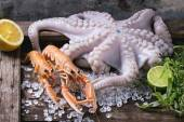 Langoustines and octopus — Stock Photo
