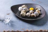 Uova di quaglia — Foto Stock