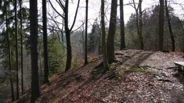 Panoramic view of autumn forest near Carlsbad (Karlovy Vary) Czech Republic — Stock Video