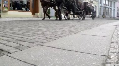 Horse pulling a carriage on pavement of old town, slow motion — Stock Video