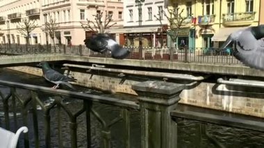Pigeons taking off on the railing of the old waterfront on a sunny day, slow motion — Vídeo de stock