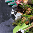 Garden tools and flower bulbs  — Stock Photo #67805463