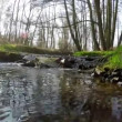 View the creek in the forest — Stockvideo #68281103