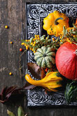 Assortment of different pumpkins and berries — Stock Photo