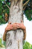 木の抱き締める — ストック写真