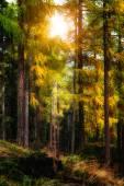 Otoño en el bosque — Foto de Stock