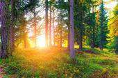 Sol de otoño — Foto de Stock