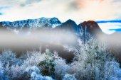 曇らされた木 — ストック写真
