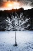 Matné strom — Stock fotografie