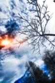曇らされたツリー — ストック写真