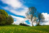 Flower meadow and trees in spring — Stockfoto