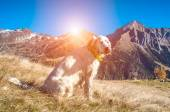 Dog on the top of the mountain — Stock Photo