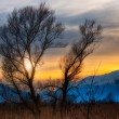 Sunset between trees in the background snowy mountains — Stock Photo #66927483