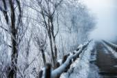 Walkway to winter frost — Стоковое фото