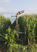 Sprinkler and corn — Stockfoto
