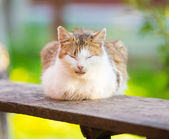 White and red cat sleep on wooden desk — Stock Photo