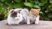Two friends pretty cats sitting — Stock Photo