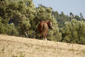 Horse grazing — Stockfoto