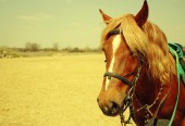 Horse in field — Stock Photo