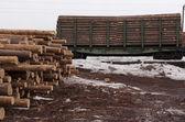 Obrovskou hromadu pine tree sudů — Stock fotografie