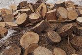Huge pile of pine tree barrels — Stock Photo