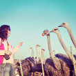 Young woman feeds ostriches — Stock Photo #67937669