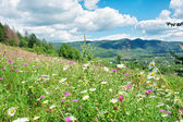 Sunny meadow with wild flowers — Stock Photo