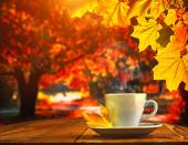 Cup coffee and autumn forest — Stock Photo