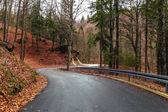 森の道 — ストック写真