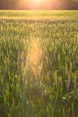 Beautiful plants in a field — Stock Photo