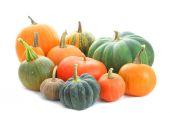 Pumpkins varieties — Stock Photo