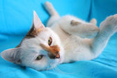 Cat relaxing and playing — Stock Photo