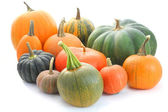Pumpkin and squash collection — Stock fotografie