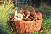 Wicker Basket with mushrooms — Stock Photo