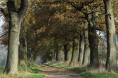 Old Oaks of the Reinhard Forest in Germany — Foto de Stock