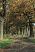 Old Oaks of the Reinhard Forest in Germany — Stock Photo