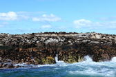 Sea lion colony at Cape Town in South Africa — Stock Photo