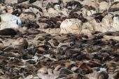 Seals on a Beach of South Africa — Stock Photo