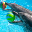 Two dolphins with the balls — Stock Photo #65110991