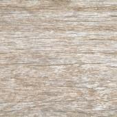 écorce de la texture de l'arbre — Photo