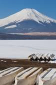 Гора Фудзи и озеро — Стоковое фото