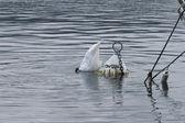 Buoy and swan like buoy — Stock Photo