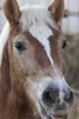 Horse in the farm — Stock Photo
